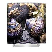 Iridescent Purple Seashells Shower Curtain