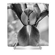 Iris 2 Monochrome Shower Curtain