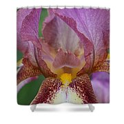 Iris 29 Shower Curtain