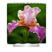 Iris 5 Shower Curtain