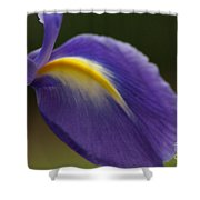 Iris 7 Shower Curtain