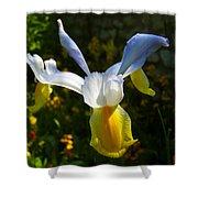 Iris 7 Shower Curtain