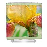 Iris 9 Shower Curtain