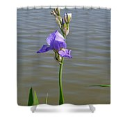 Iris At The Lake Shower Curtain
