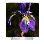 Iris Baroque Shower Curtain