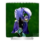 Iris Blues Shower Curtain