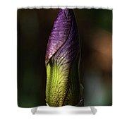 Iris Bud Shower Curtain