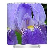 Iris Close Up 1 Shower Curtain