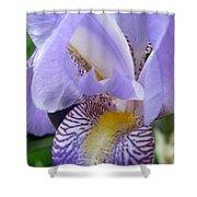 Iris Close Up 3 Shower Curtain