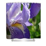 Iris Close Up 4 Shower Curtain