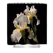 Iris Cream Shower Curtain