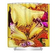 Iris - Customized Shower Curtain