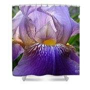 Iris Dancing In The Spring Shower Curtain