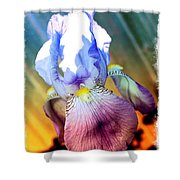 Iris Drama Shower Curtain