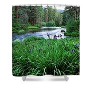 Iris Flowers By The Metolius River Shower Curtain