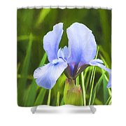 Pale Purple Iris - Impressions Of Spring Shower Curtain