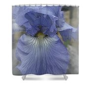 Iris Heart Shower Curtain by Kay Novy