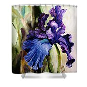 Iris In Bloom 2 Shower Curtain