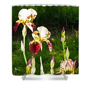 Iris In The Sun Shower Curtain