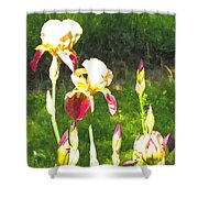 Iris In Watercolor Shower Curtain