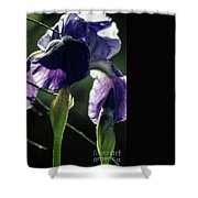 Spring's Gift Shower Curtain