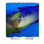 Iris On Blue Shower Curtain