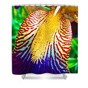 Iris Petal By Jan Marvin Shower Curtain