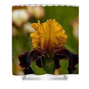 Iris Pictures 149 Shower Curtain