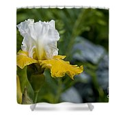 Iris Pictures 169 Shower Curtain