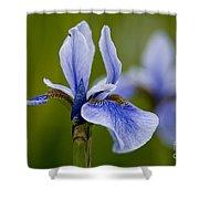 Iris Pictures 185 Shower Curtain