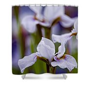 Iris Pictures 195 Shower Curtain