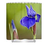 Iris Pictures 219 Shower Curtain