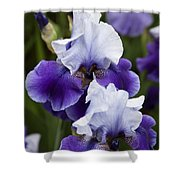 Iris Purple And White Fine Art Floral Photography Print As A Gift Shower Curtain