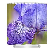 Iris Purple Pepper Shower Curtain