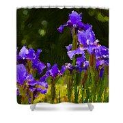 Iris Radiance Shower Curtain