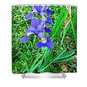 Iris Swirl Shower Curtain