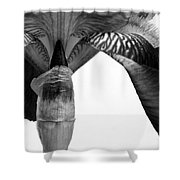Iris Textures In Black And White Shower Curtain
