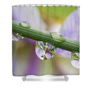 Iris Versicolor Reflection Shower Curtain