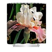 Iris White To Pink Shower Curtain