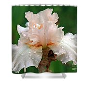 Iris With Dewdrops Shower Curtain