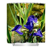 Iris With Frog Shower Curtain