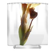 Iris Yellow Shower Curtain