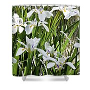 Irises Dancing In The Sun Painted Shower Curtain