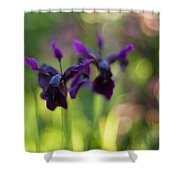 Irises Depth Shower Curtain