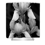 Irises In Black And White Shower Curtain