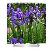 Irises In Spring Shower Curtain