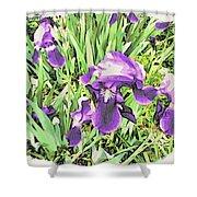 Irises In The Garden Shower Curtain