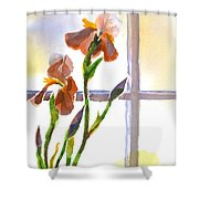 Irises In The Window Shower Curtain by Kip DeVore