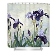 Irises Purple Flowers Painting Floral K. Joann Russell                                           Shower Curtain