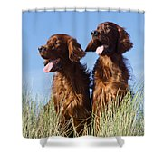 Irish Red Setter Dog Shower Curtain
